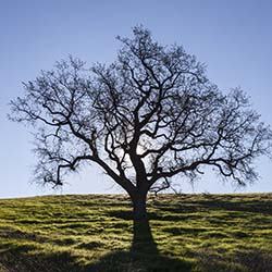 Tree - Estate Planning Attorney Thousand Oaks