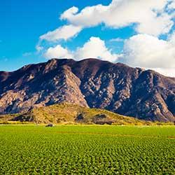 Field and mountain in Camarillo, CA